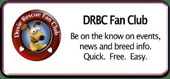 DRCB FC - Rectangle